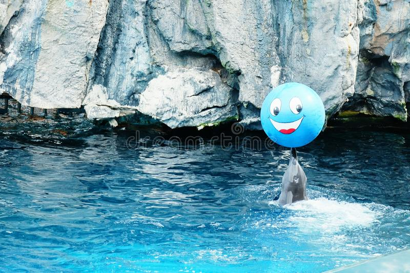 Dolphins show action smile. Dolphins show action stock photos