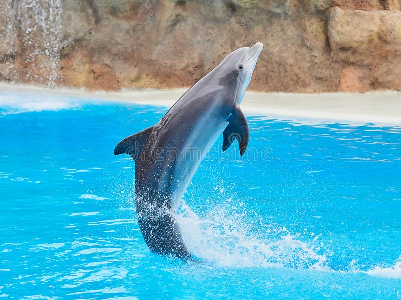 Dolphins show at the Loro Park Loro Parque, Tenerife. Dolphins show at the Loro Park Loro Parque, Tenerife stock image