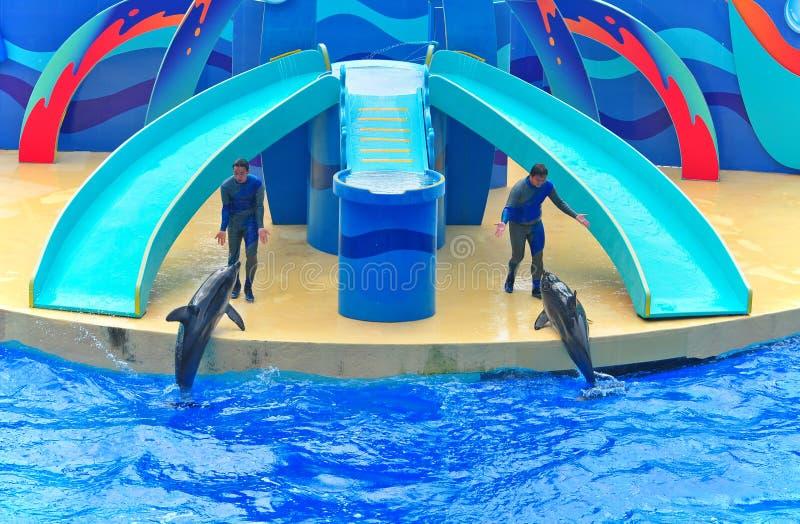 Dolphins Show At Ocean Park Hong Kong Editorial Stock Image