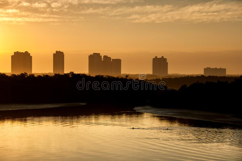 Dolphins swim beneath highrises in the hazy light of a golden sunrise. Dolphins swim beneath highrises in the hazy light of a golden sunrise over Estero Bay royalty free stock images