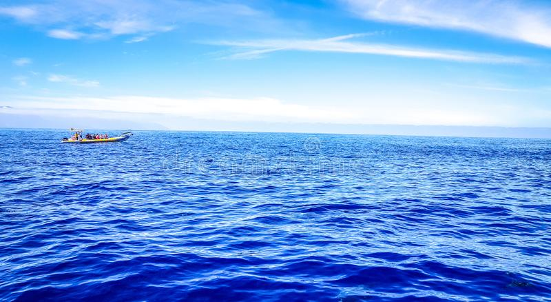 Dolphins swimming in the Atlantic Ocean in front of Los Gigantes, Canary Islands, Tenerife. Water coast bottlenose nature blue family wild aquatic animal cruise royalty free stock photography