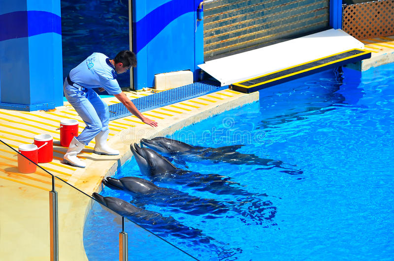 Dolphins and the trainer royalty free stock photo