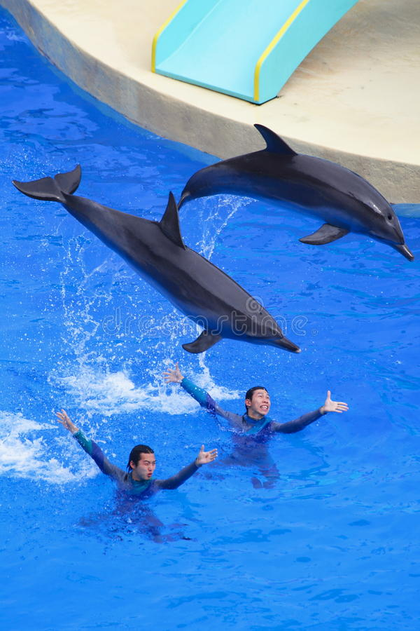Dolphins and trainers stock image