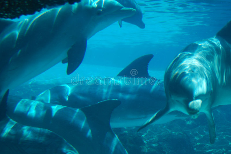 Dolphins Underwater stock images