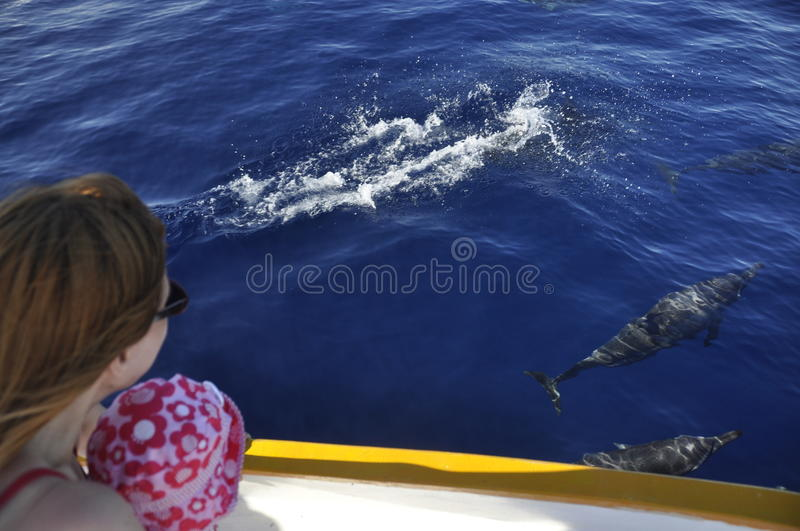 Dolphins watching royalty free stock photos