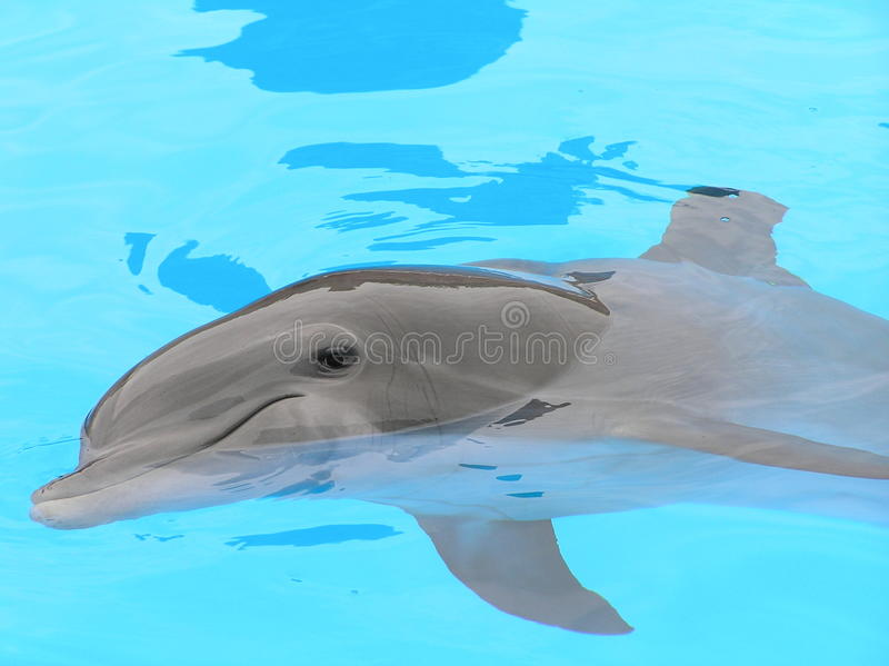 Download DolphinUpClose stock image. Image of friendly, captive - 11054761