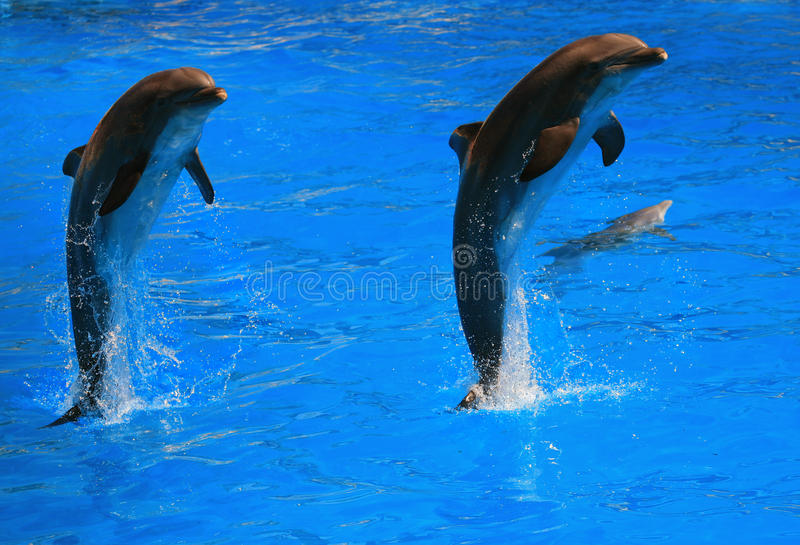 Download Dolpin jumping stock photo. Image of life, beauty, diving - 21017126
