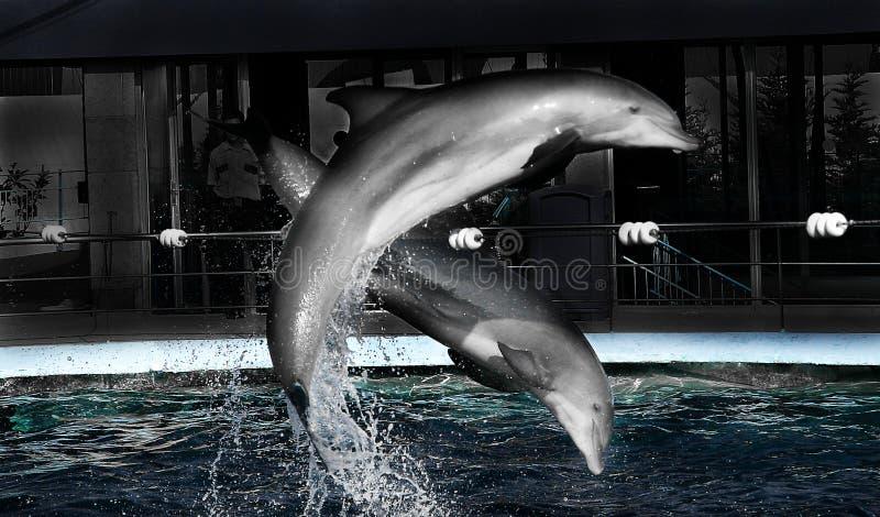 Dolpins paralelamente fotografie stock libere da diritti
