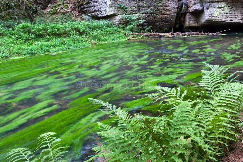 Dolsky watermill na Kamenice rzece, Jetrichovice region, czech Szwajcaria, republika czech obraz stock