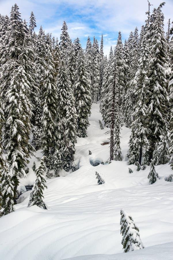 Dolt landskap för snö på Mt rainier arkivfoto