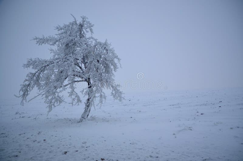Dolt träd för snö arkivbild