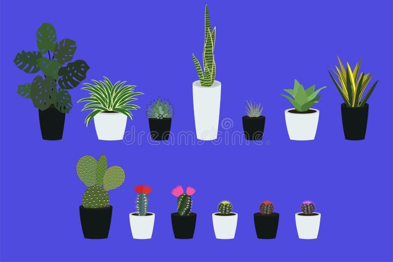Domów kaktusy i ilustracji