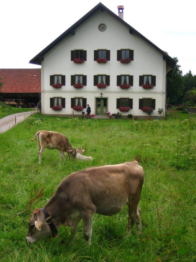 dom bavarian fotografia stock