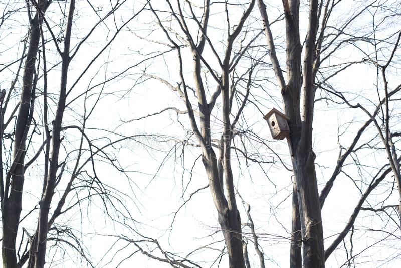 Dom dla ptak?w na drzewie zdjęcia stock
