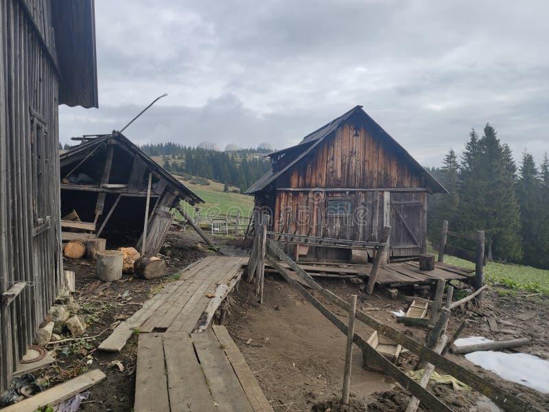 Dom dla turystów i bac w Ukraińskich Carpathians zdjęcia stock