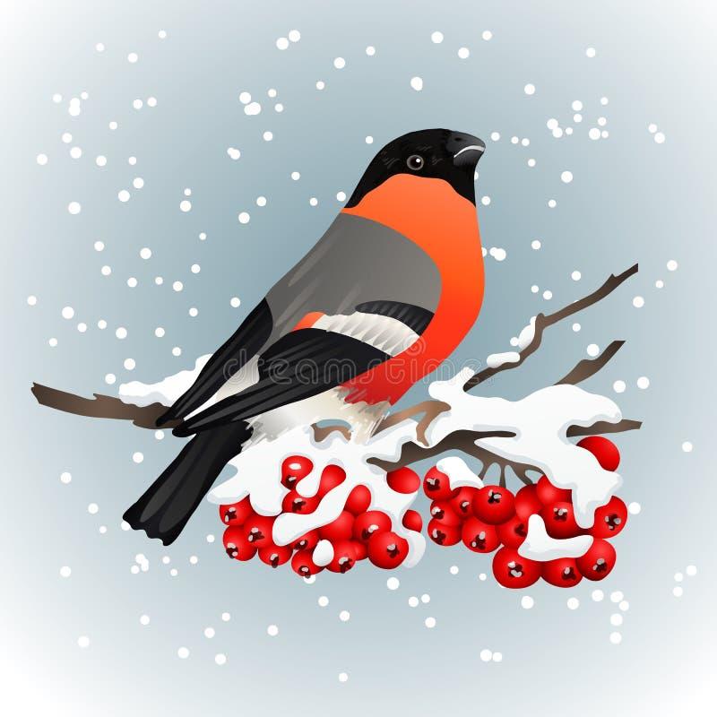 Dom-fafe que senta-se no ramo coberto de neve da cinza de montanha Natureza do inverno Ilustração do vetor ilustração royalty free