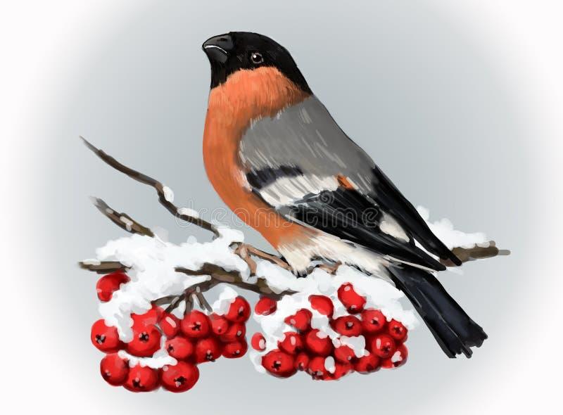 Dom-fafe que senta-se no ramo snowcovered da cinza de montanha Natureza do inverno ilustração do vetor