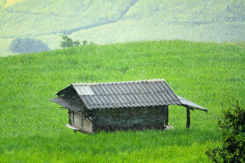 Dom lub buda zostaje po środku zielonych ryż poly z ciężki dżdżystym zdjęcie royalty free