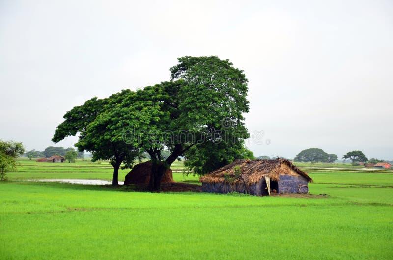Dom na irlandczyka polu lokalizować w Bago, Myanmar obraz stock