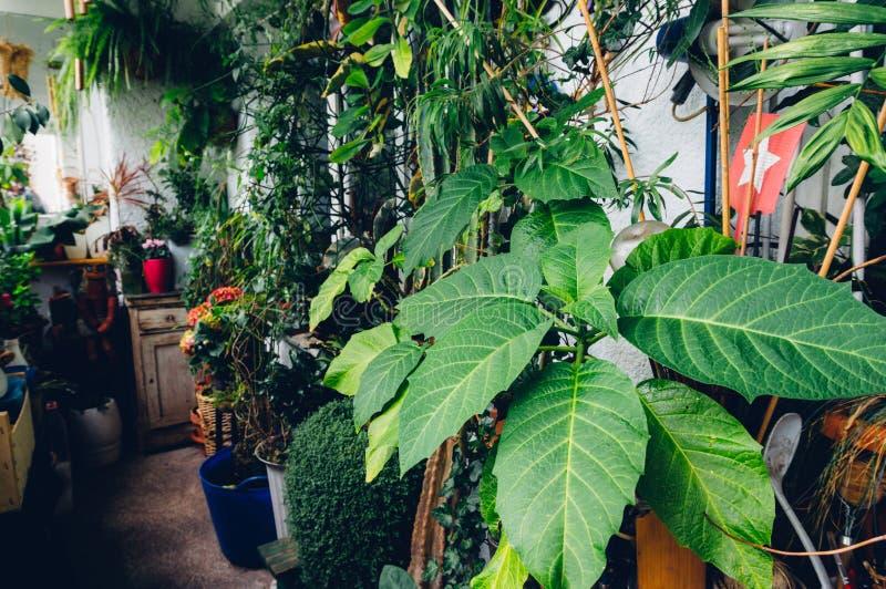 Dom rośliny obraz royalty free