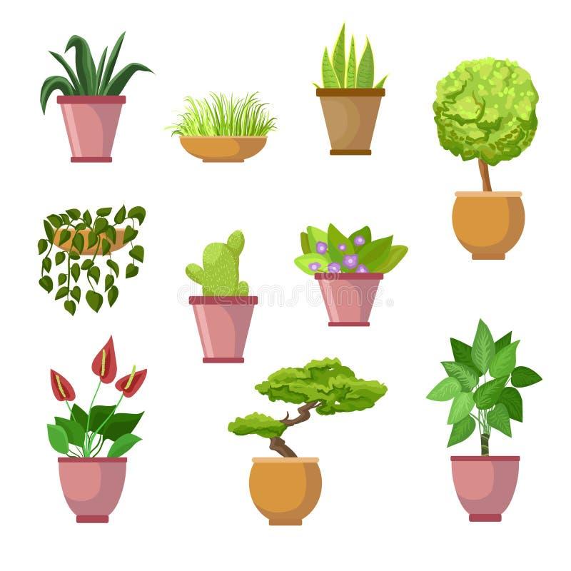 Dom rośliny i dekoracyjni houseplants kwitną w garnkach - wektor royalty ilustracja