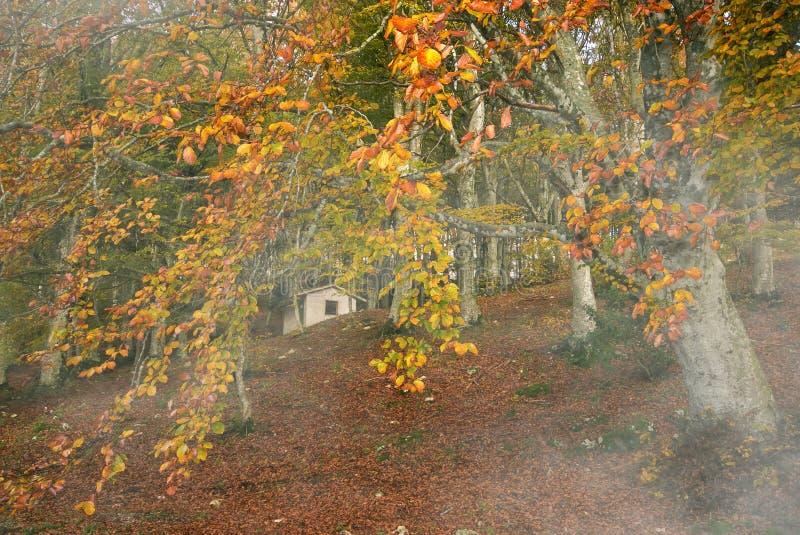 Dom w jesień buku lesie fotografia royalty free