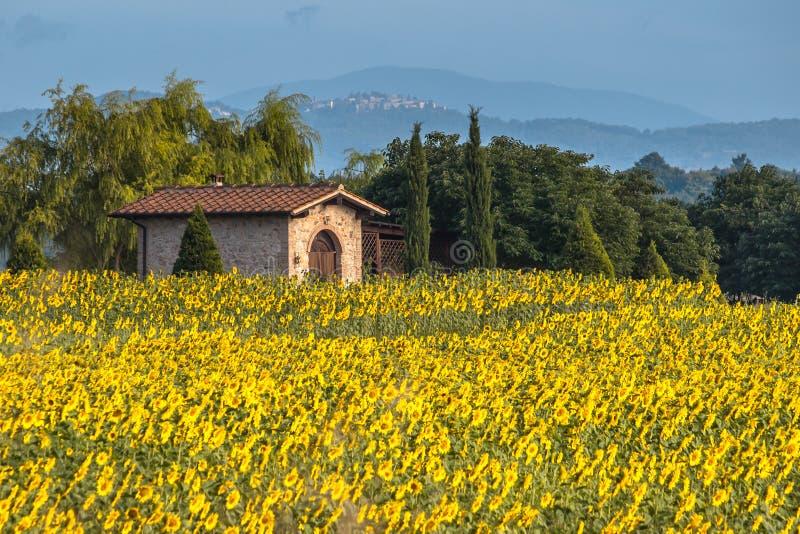Dom w polu słoneczniki fotografia royalty free