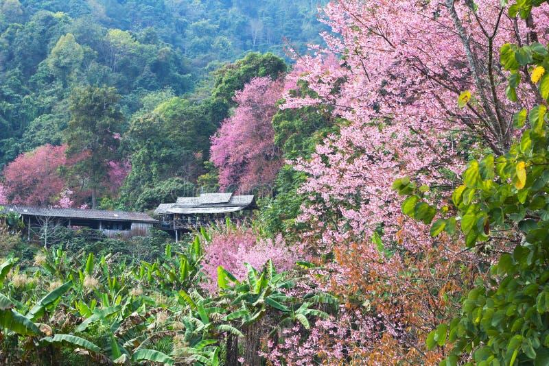 Dom w różowym lesie zdjęcie stock