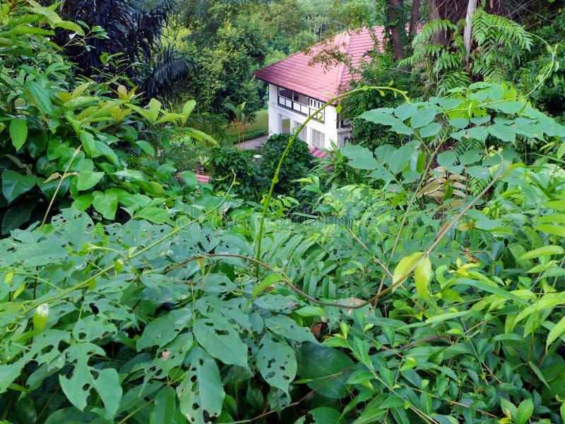 Dom w tropikalnym lesie obrazy stock