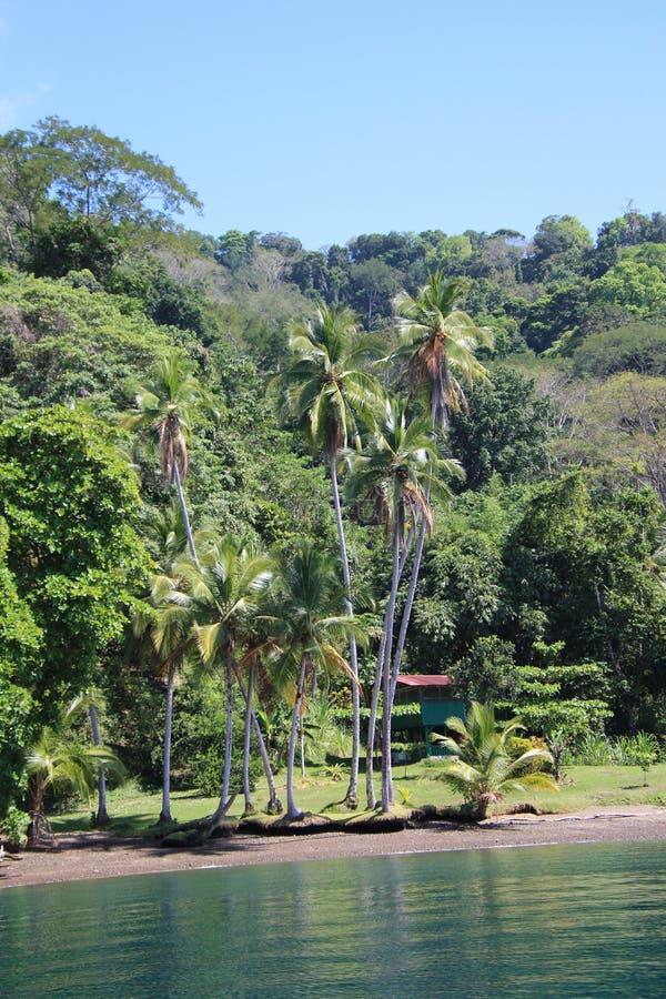 Dom w tropikalnym lesie deszczowym zdjęcie royalty free