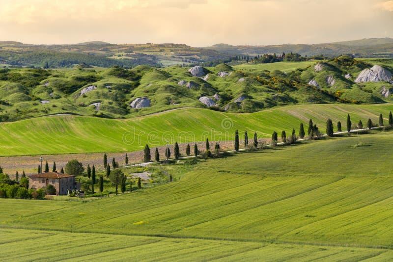 Dom wiejski i aleja w pobliskim Siena, Crete Senesi, Tuscany, Włochy fotografia stock