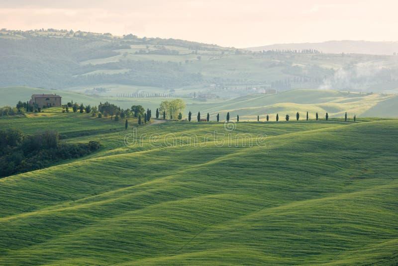 Dom wiejski z cypess aleje i polami, Tuscany, Włochy zdjęcie royalty free