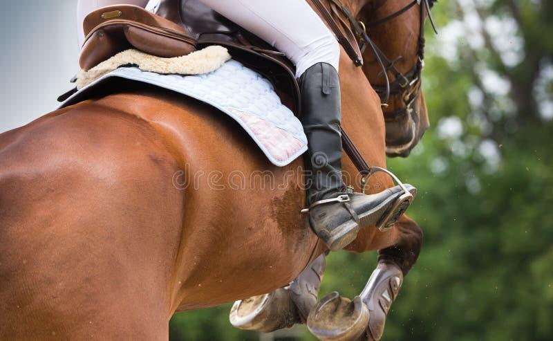 Doma del montar a caballo foto de archivo libre de regalías