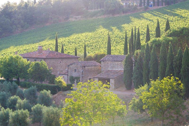 Domaine de Castello di Albola image stock