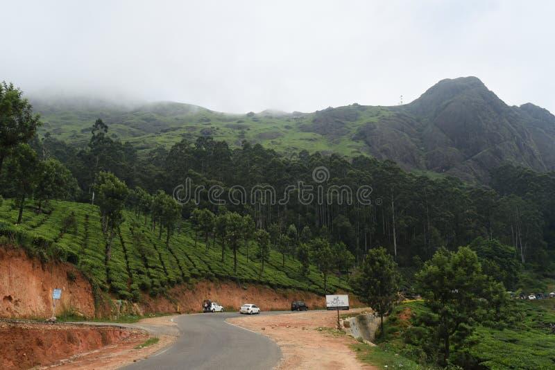 Domaine de thé de Munnar et montagne, Kerala, Inde image stock