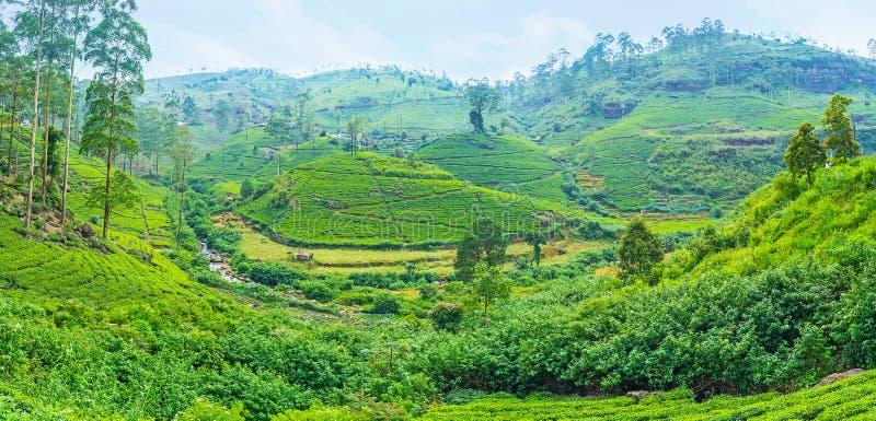 Domaines de thé dans Sri Lanka photo stock
