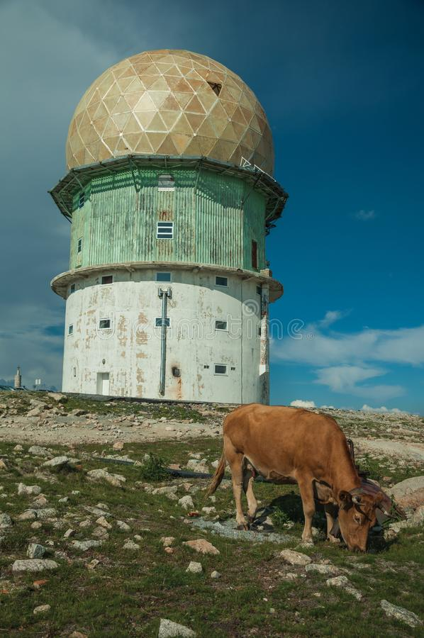 Dome of an old radar station and a cow. On a rocky place called Torre, in the highest point of the Serra da Estrela. The highest mountain range in continental royalty free stock photos