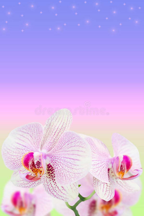 Dome orquídeas manchadas no inclinação borrado fotografia de stock