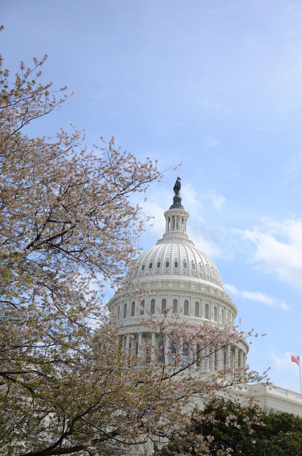 Dome of United States Capitol. United States Capitol dome and flowers stock photos
