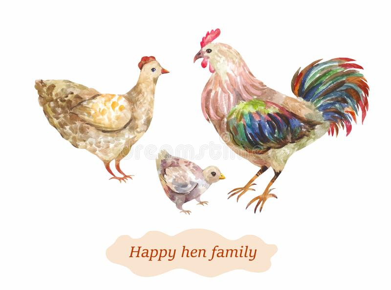 Domestic bird family. Hen, cock and chick. Vector watercolor illustrati royalty free stock photos