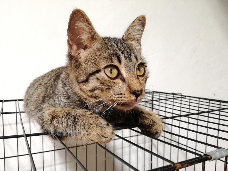 Domestic brown cat. A brown beutiful domestic cat sleeping under her cage royalty free stock images
