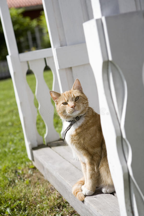 Download Domestic cat stock image. Image of focus, front, kitten - 25061857