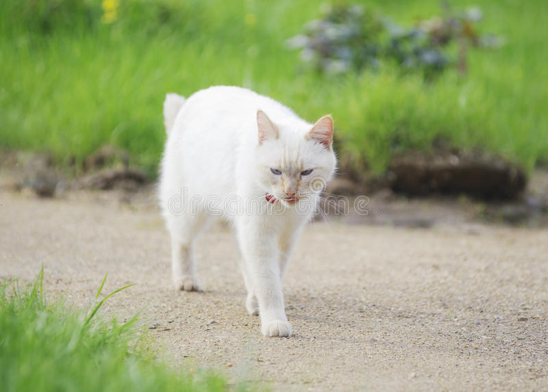 Download Domestic cat stock image. Image of kitty, kitten, adorable - 25245371