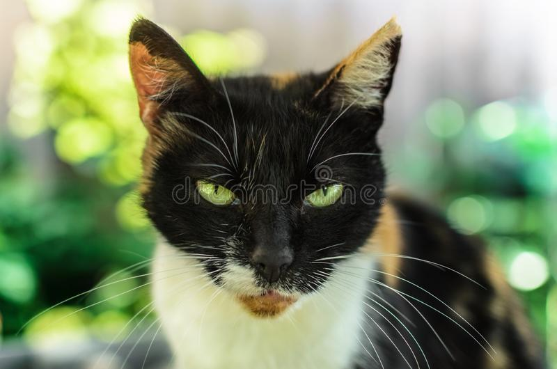 Domestic cat in the backyard. With green eyes in the garden stock images