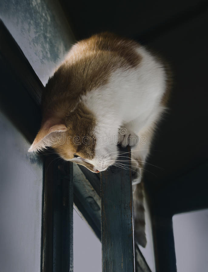 Domestic cat cleverly sitting on window frame, cats lifestyle. Domestic ginger cat cleverly sitting on the window frame and looks down with curiosity, cats life stock image
