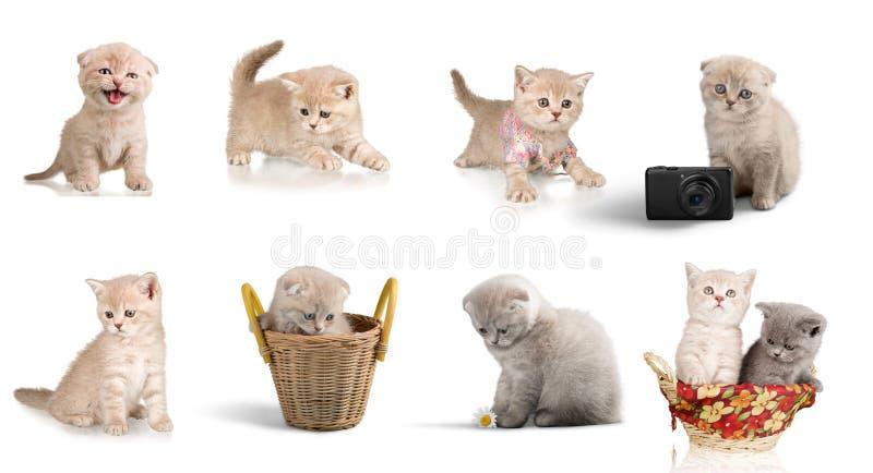 Domestic cat. Kitten cute animal pets small gray royalty free stock photo