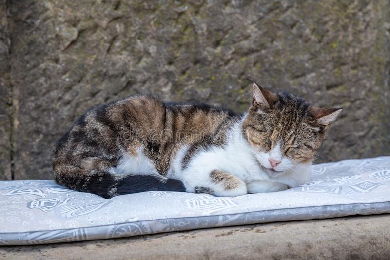 A domestic cat. Domestic cat lying on the street royalty free stock image