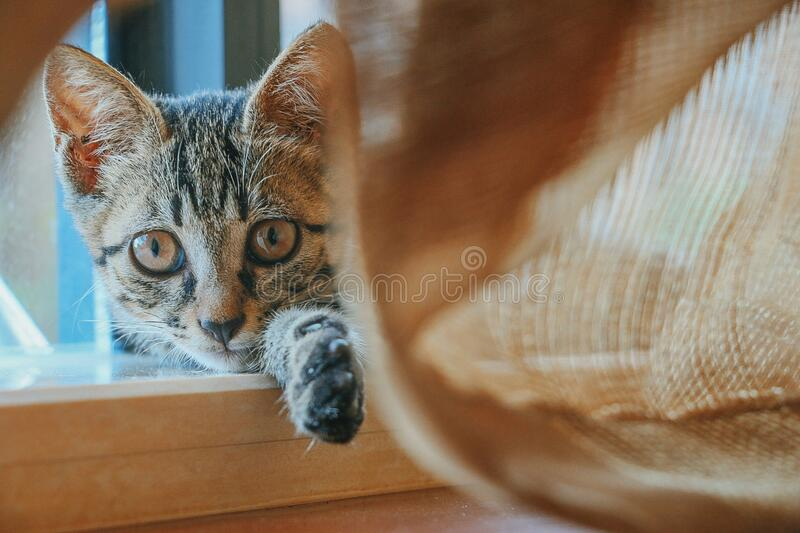 Domestic cat indoors stock photography