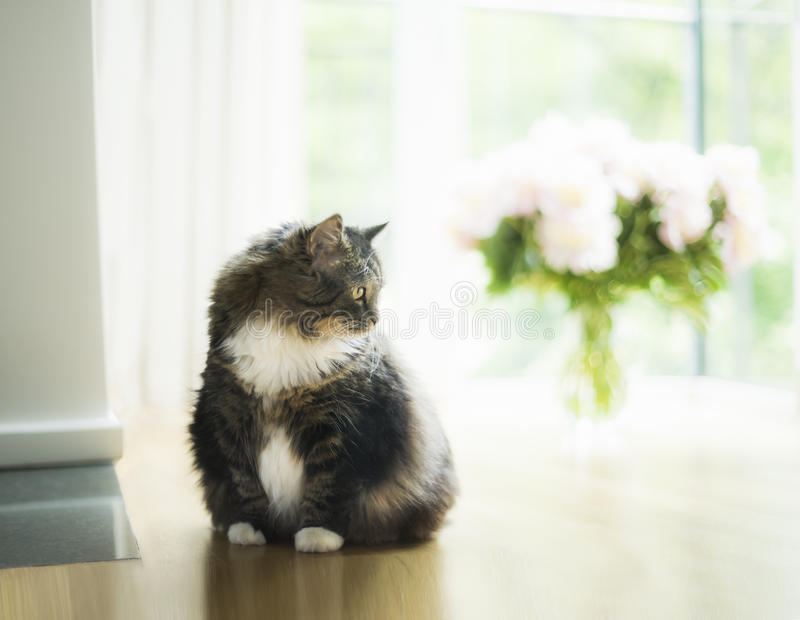 Domestic cat in living room over big window and bouquet of flowers. Pretty home scene with cat royalty free stock image