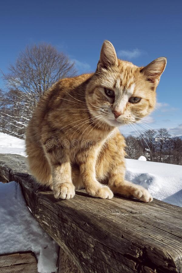 Domestic cat in nature stock images